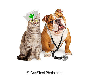 Dog veterinarian and cat nurse sitting together over white