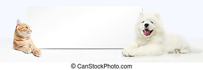 Dog and Cat with blank banner isolated on white background