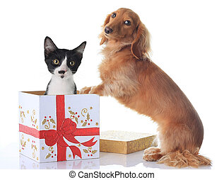 Dog and Christmas present. - Puppy and kitten and the...