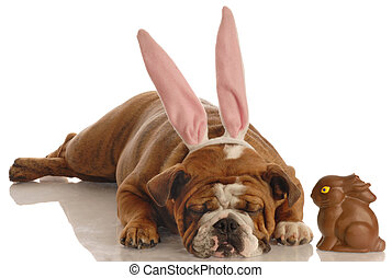 dog and easter bunny