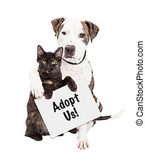 Dog and Kitten Adopt Us Sign - A cute Pit Bull dog with his...
