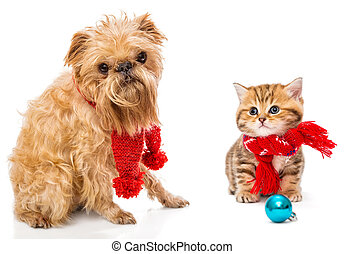 Dog and little kitten in scarf