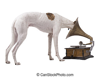 Dog and old gramophone - Greyhound and an old gramophone...