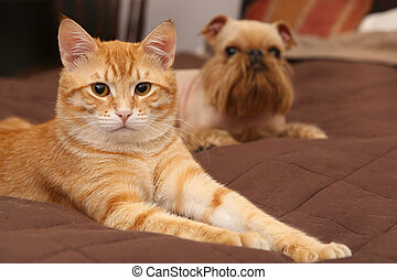 Dog and orange kitten  on the bed