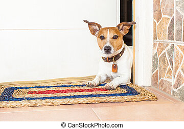 dog and owner - jack russell dog waiting for owner to play...