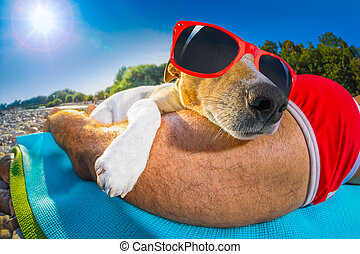 dog and owner siesta at beach - jack russell dog and owner...