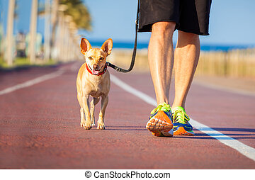 Dog and owner walking - chihuahua dog close together to...