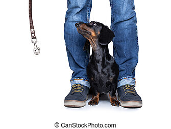 dog and owner  with leash for a walk