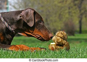 Dog and teddy bear