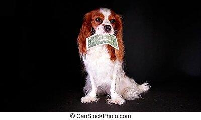 Dog animal pet holding one dollar bill american money