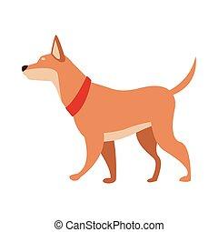 dog animal pet