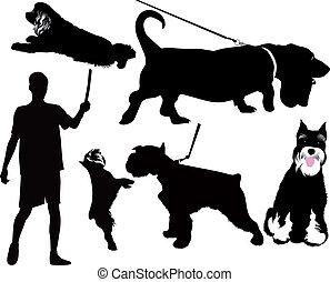 dog animals isolated