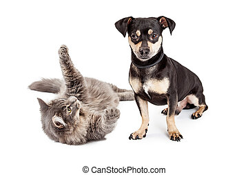Dog Annoyed With Playful Cat