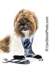 Dog as A Doctor