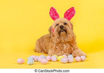 Dog as easter bunny