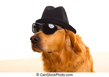 Dog as mafia gangster with black hat and sunglasses - Dog...
