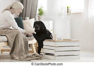 Dog assistant giving paw - Black dog assistant giving paw to...