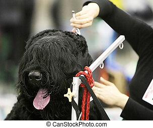 Dog at  a barbershop - Dog at  a hairdressing saloon