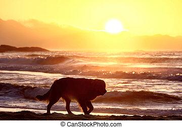 Dog at beach sunrise