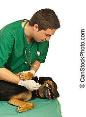 Dog at dentist