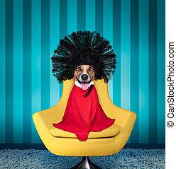 dog  at hairdressers salon