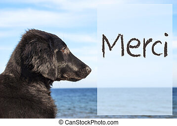 Dog At Ocean, French Text Merci Means Thank You