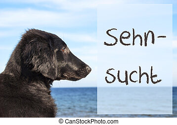 Dog At Ocean, Sehnsucht Means Desire - German Text Sehnsucht...
