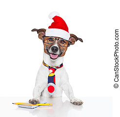 dog at office with santa hat for christmas