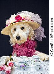 Dog at Teatime - Portrait of golden doodle puppy all dressed...