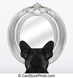 french bulldog dog staring or looking at the mirror on the white wall