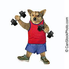 Dog athlete lifts dumbbells 3