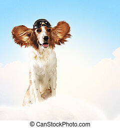 Dog-aviator wearing a helmet pilot. Collage - A dog wearing...