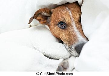 dog awake - dog just woke up from a beautiful dream