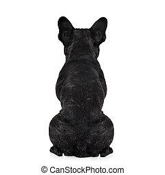 dog, back, torso