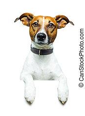 dog banner placeholder