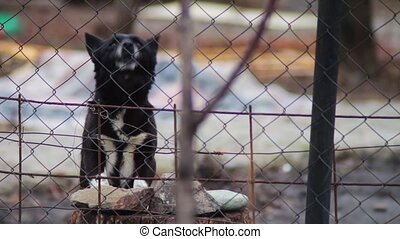 Dog barking behind a fence - Mongrel dog dog that guards and...