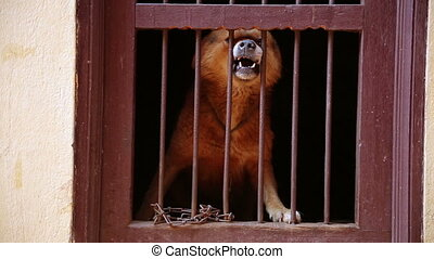 Dog barking in its cage
