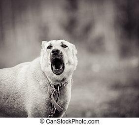Dog barking