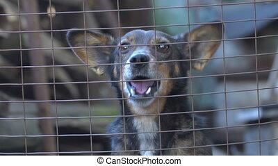 Dog barking slow motion - The dog barks in the enclosure....