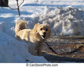 dog barks