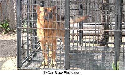 dog barks in the aviary