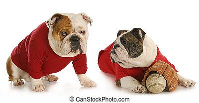 dog baseball team
