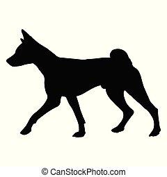 Dog Basenji breed. Silhouette - Dog Basenji breed on a white...