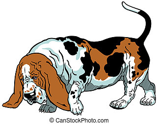 basset - dog basset hound breed,illustration isolated on...