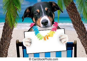 dog beach chair in summer with a board