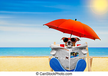 jack russell dog reading newspaper on a beach chair or hammock with sunglasses under umbrella , on summer vacation holidays