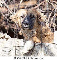 dog behind a fence