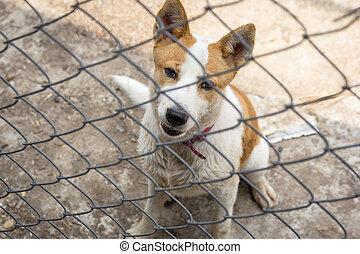 Dog behind the iron fence