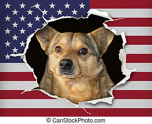 Dog behind the us flag