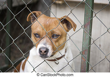 Dog behind wire mesh - Close up of sad dog behind wire mesh